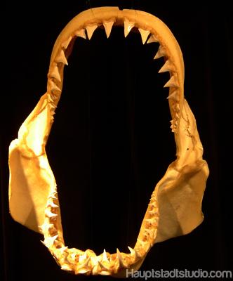Hai Gebiss