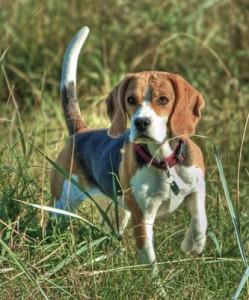 Hundebesitzer sollten auf ihre Tiere achten