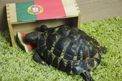 Paul das Schildkröten-Orakel